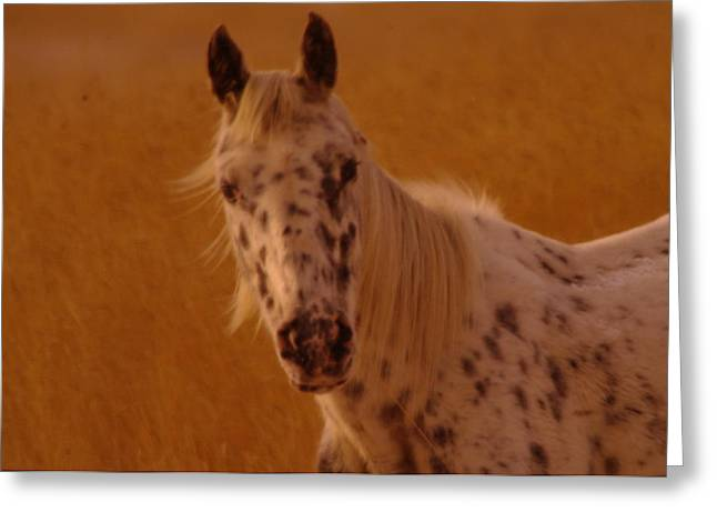 Spotted Horse Greeting Cards - Curious Pony With Spots Greeting Card by Jeff  Swan