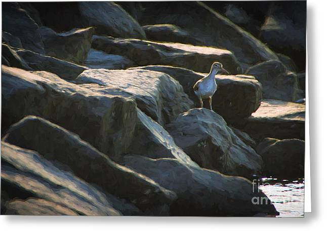 Sandpiper Greeting Cards - Curious Sandpiper Greeting Card by Heidi Piccerelli