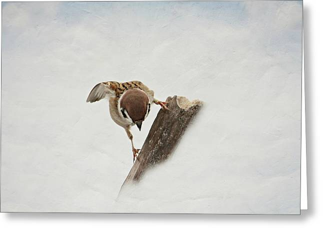 Sparrow Greeting Cards - Curious Sparrow Greeting Card by Heike Hultsch