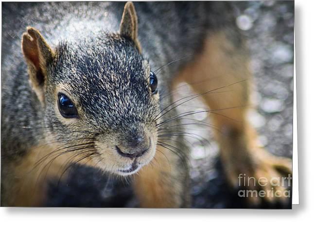 Joann Copeland-paul Greeting Cards - Curious Squirrel Greeting Card by Joann Copeland-Paul