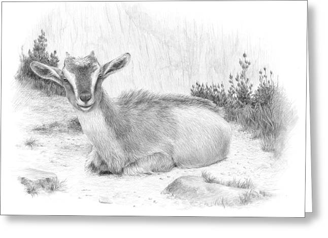 Goat Drawings Greeting Cards - Curiousity Greeting Card by Diane Cardaci