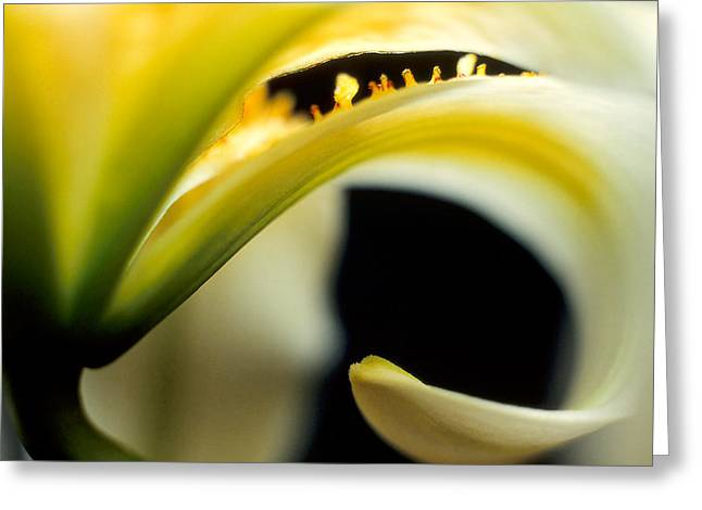 Recently Sold -  - Close Focus Floral Greeting Cards - Curl Greeting Card by Daniel Maslanka