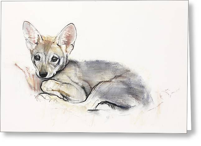Curled Up Greeting Cards - Curled Arabian Wolf Pup Greeting Card by Mark Adlington