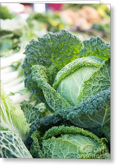 Cabbages Greeting Cards - Curly Cabbage Greeting Card by Rebecca Cozart