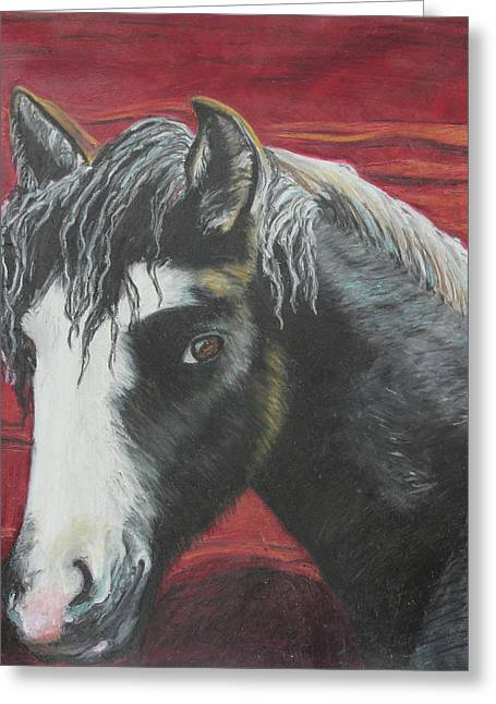 Dust Pastels Greeting Cards - Curly - The Nokota Mustang Greeting Card by Jeanne Fischer