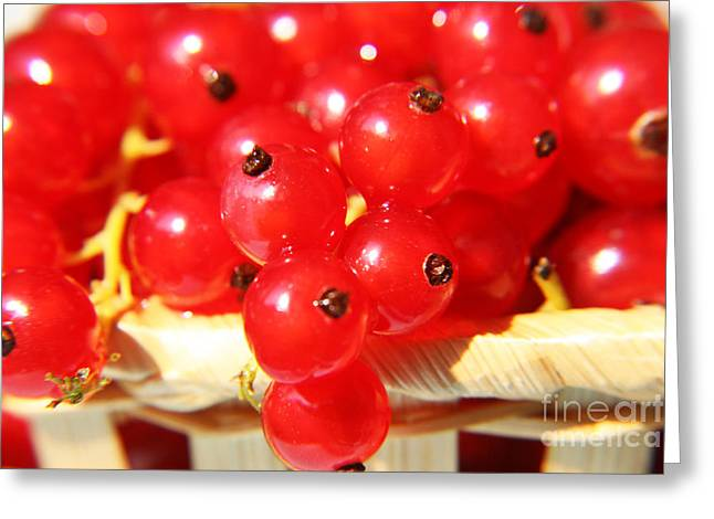 Agronomy Greeting Cards - Currants  Greeting Card by Lali Kacharava