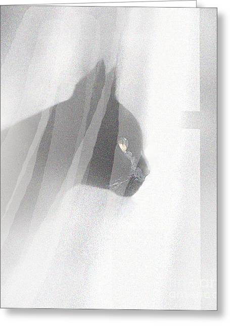 Robert Foster Greeting Cards - Curtain View 2 Greeting Card by Robert Foster