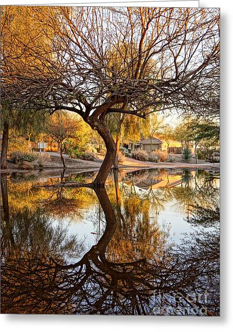 Curved Reflection Greeting Card by Kerri Mortenson