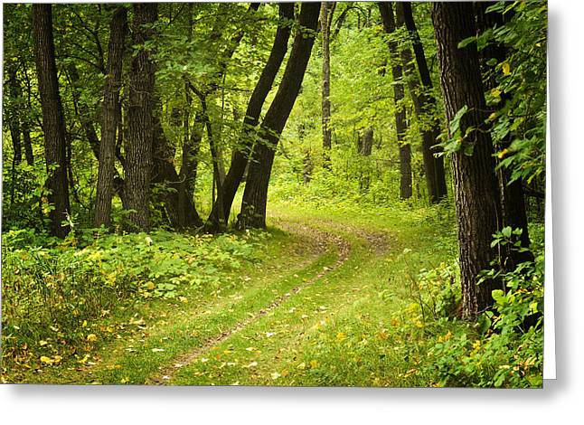 Erickson Greeting Cards - Curving Trail entering Deciduous Forest Greeting Card by Donald  Erickson