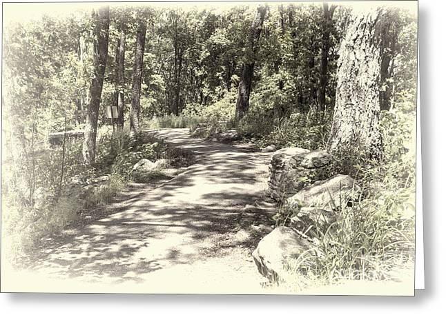 Dappled Light Greeting Cards - Curvy Path Greeting Card by Diane Macdonald
