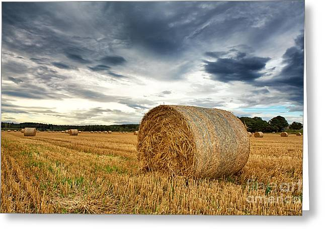 Rural Scenery Greeting Cards - Cut field Greeting Card by Jane Rix