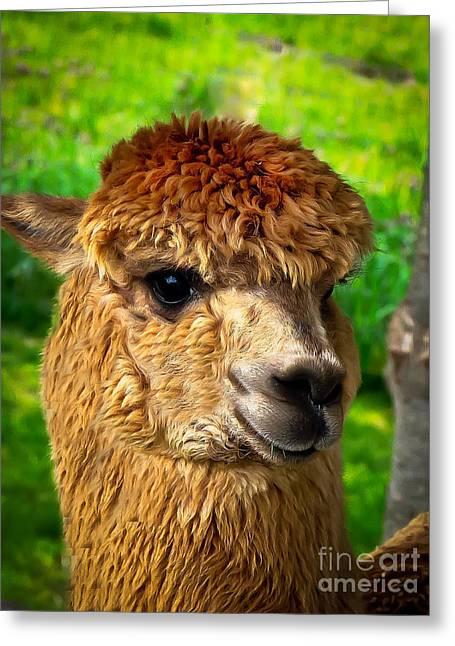 Alpaca Greeting Cards - Cute Alpaca Greeting Card by Robert Bales