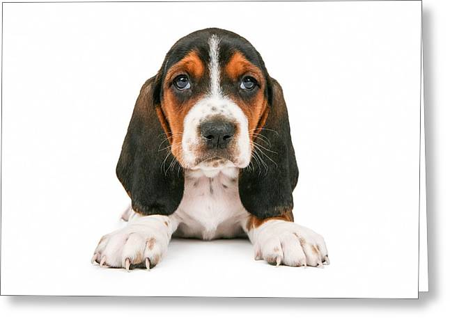 Puppies Photographs Greeting Cards - Cute Basset Hound Puppy Looking Forward Greeting Card by Susan  Schmitz