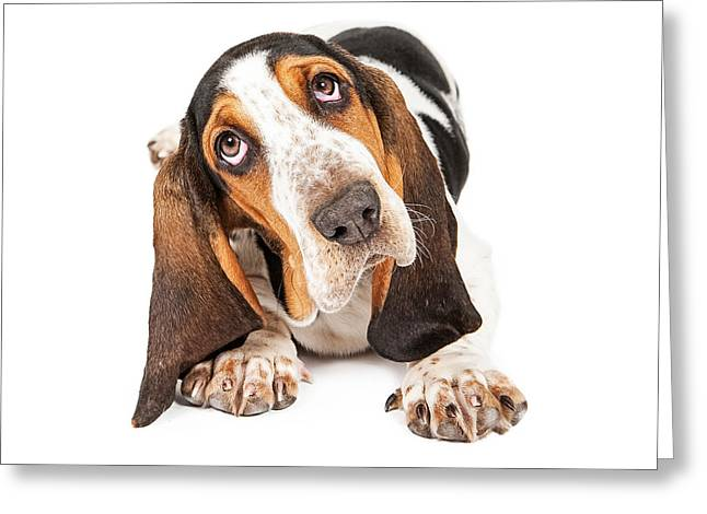 Domestic Animal Greeting Cards - Cute Basset Puppy Tilting Heard Greeting Card by Susan  Schmitz