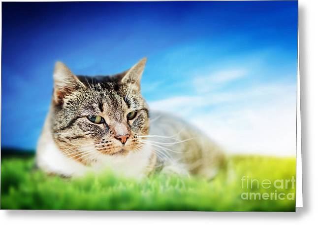 Gray Hair Greeting Cards - Cute cat lying on green spring grass on sunny day Greeting Card by Michal Bednarek