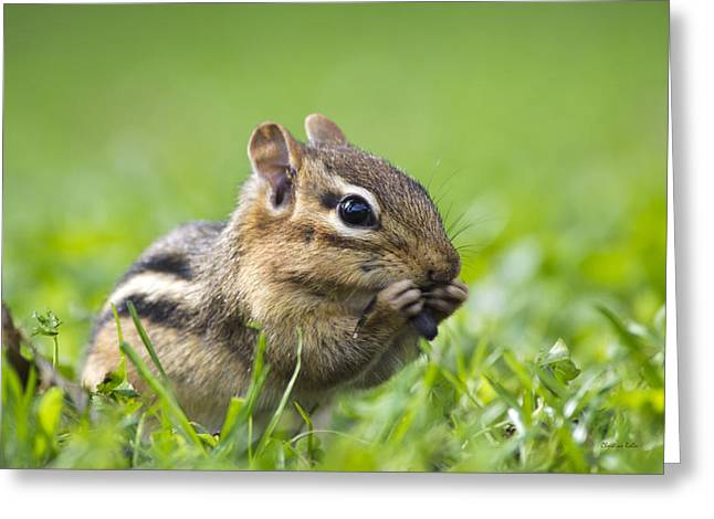 Chipper Greeting Cards - Cute Chipmunk Greeting Card by Christina Rollo