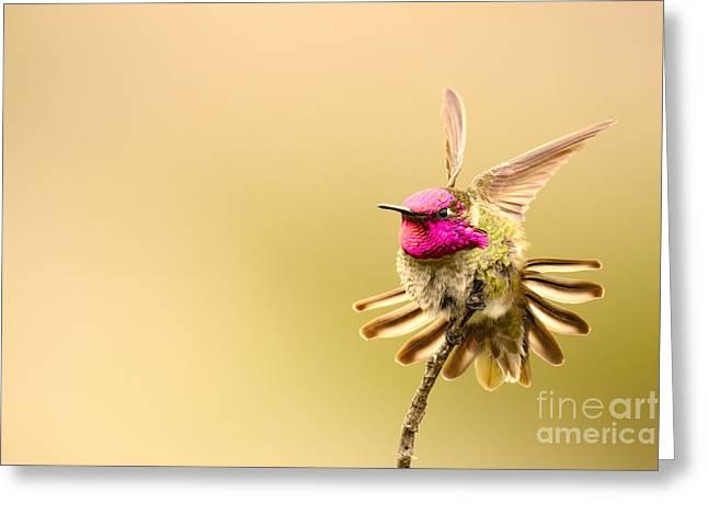 Large Format Animal Print Greeting Cards - Cute Coast Hummer Greeting Card by John Tsumas