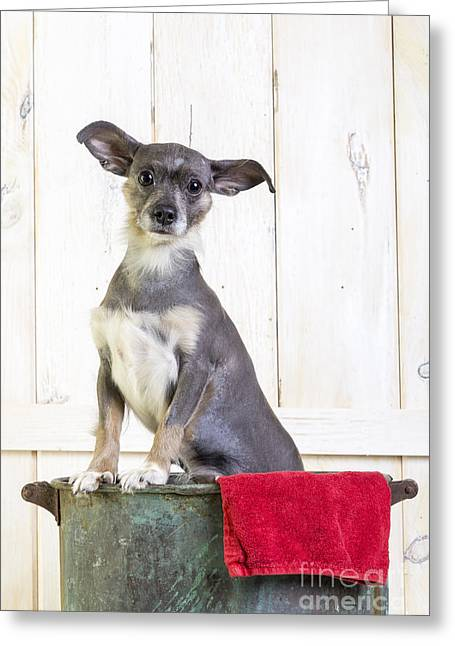 Cute Puppy Greeting Cards - Cute Dog Washtub Greeting Card by Edward Fielding