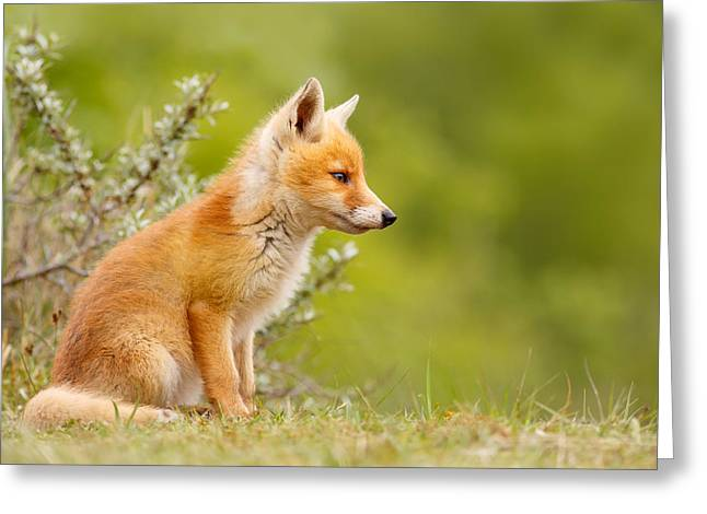 Suckling Greeting Cards - Cute Fox Kit Greeting Card by Roeselien Raimond