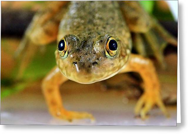 Tree Frog Greeting Cards - Cute Frog Face Greeting Card by Dan Sproul