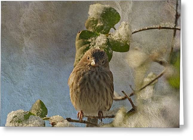 House Finch Greeting Cards - Cute Little Finch Greeting Card by Sandy Keeton