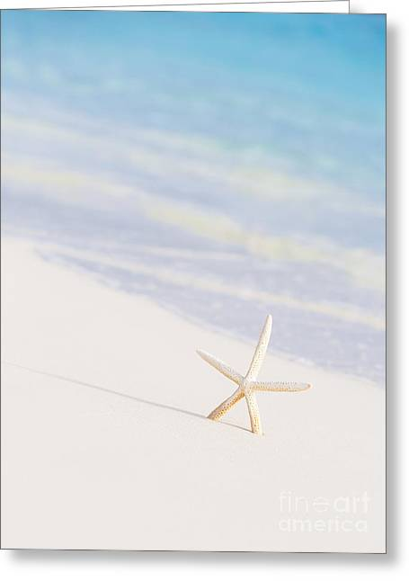 Star Fish Greeting Cards - Cute little white sea star Greeting Card by Anna Omelchenko