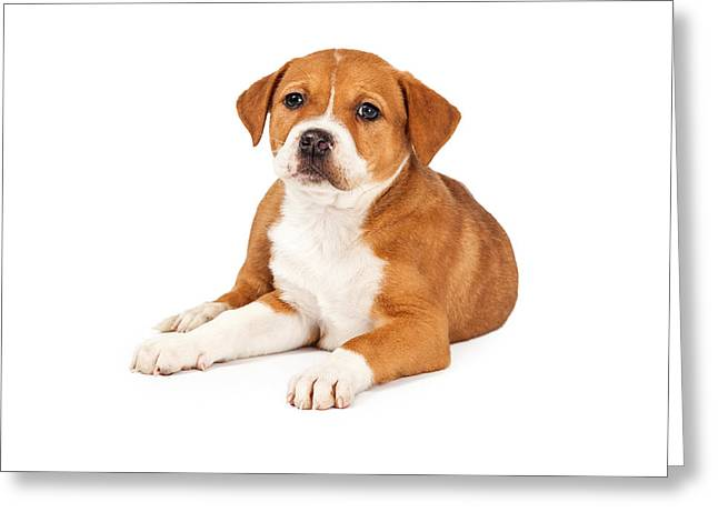 Mutt Greeting Cards - Cute Mixed Breed Puppy Laying Greeting Card by Susan  Schmitz