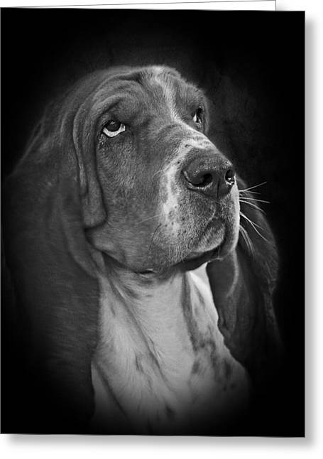 White Dog Greeting Cards - Cute Overload - The Basset Hound Greeting Card by Christine Till
