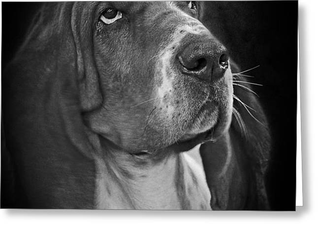 Cute Overload - The Basset Hound Greeting Card by Christine Till