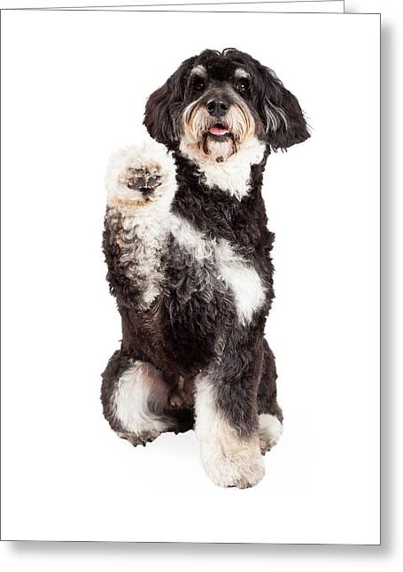 Smiling Animals Greeting Cards - Cute Poodle Mix Breed Dog Shaking Paw Greeting Card by Susan  Schmitz