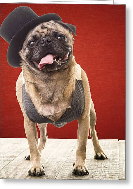 Pug Posters Greeting Cards - Cute Pug dog in vest and top hat Greeting Card by Edward Fielding