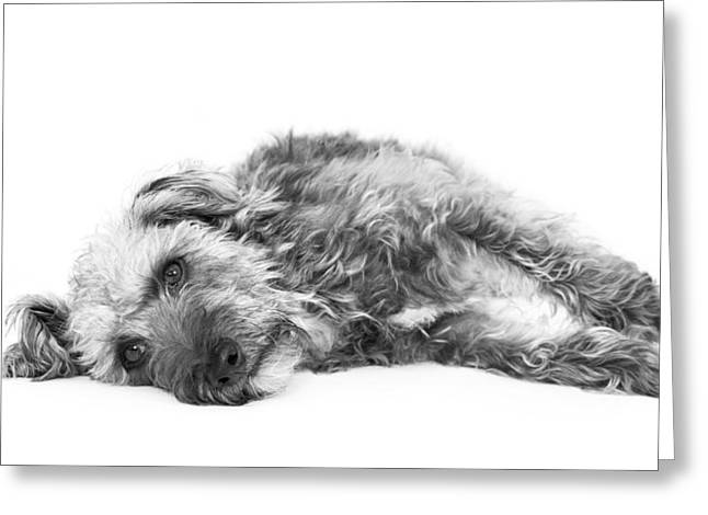 Hairy Dog Greeting Cards - Cute Pup Lying Down - Black and White Greeting Card by Natalie Kinnear