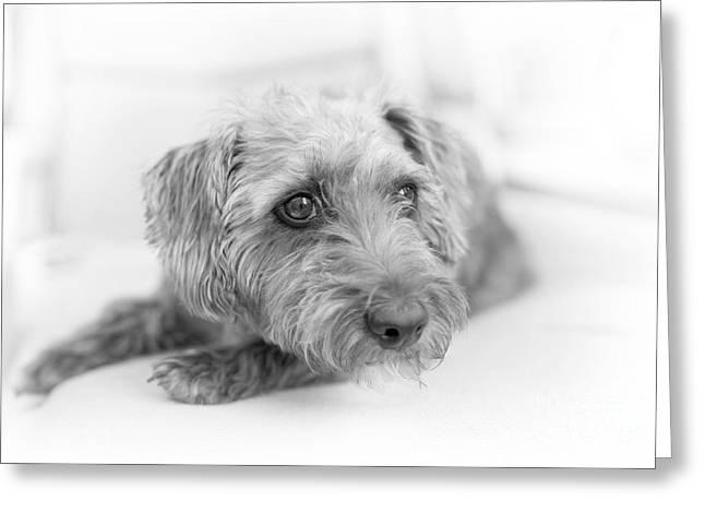 Lounge Digital Art Greeting Cards - Cute Pup on Watch Greeting Card by Natalie Kinnear