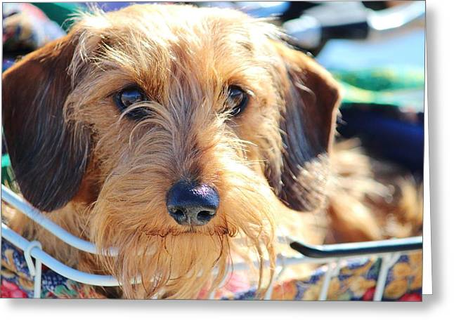 Cute Puppy Greeting Card by Cynthia Guinn