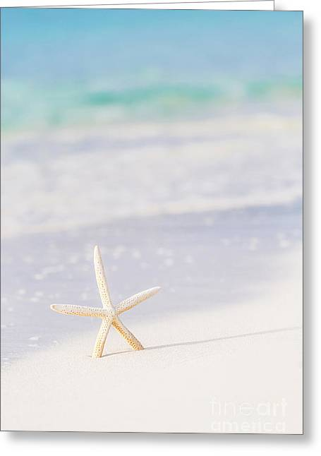 Star Fish Greeting Cards - Cute sea star on seashore Greeting Card by Anna Omelchenko