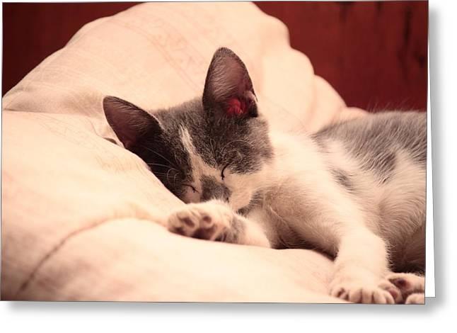 Cute Sleeping Kitten Greeting Card by Tilen Hrovatic