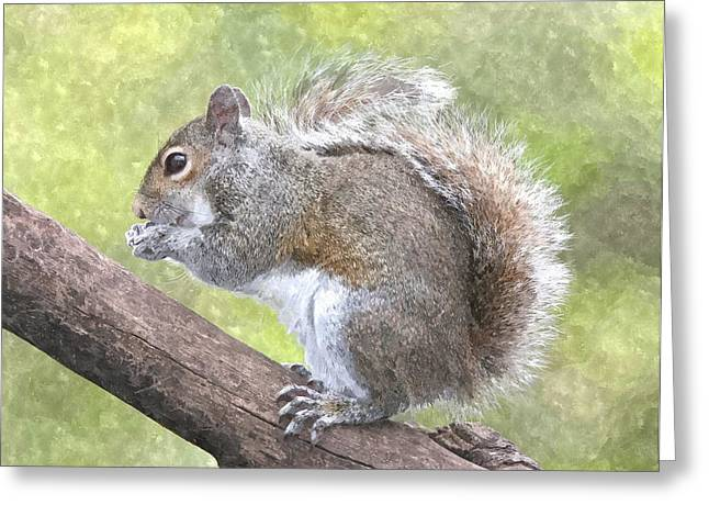 Color Green Greeting Cards - Cute Squirrel Greeting Card by Gianfranco Weiss