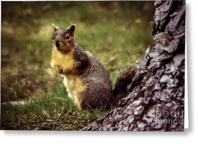 Cute Squirrel Greeting Card by Robert Bales