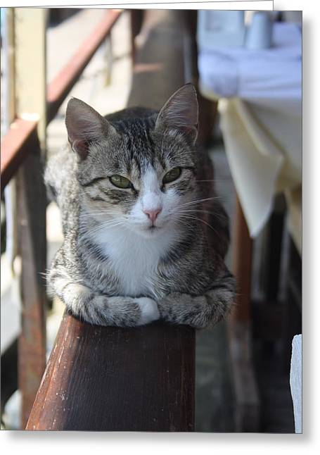 Tracey Harrington-simpson Greeting Cards - Cute Tabby Cat Sitting On The Fence Greeting Card by Tracey Harrington-Simpson