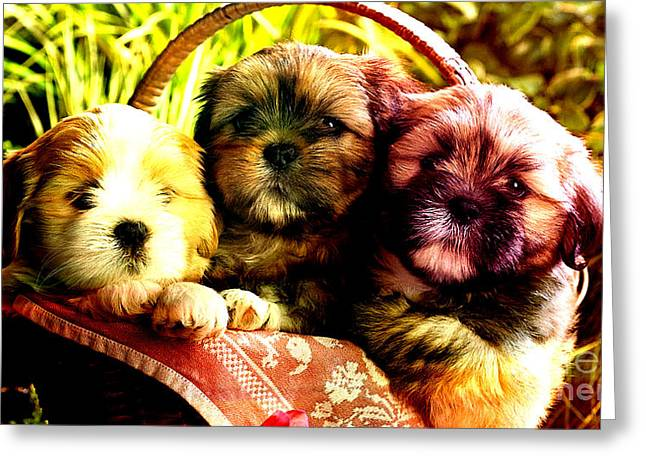 Puppies Mixed Media Greeting Cards - Cute Terrier Puppies Greeting Card by Marvin Blaine