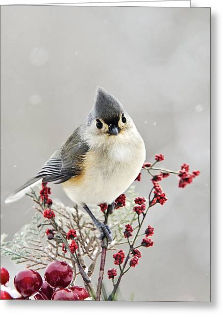 Birds In Winters Greeting Cards - Cute Winter Bird - Tufted Titmouse Greeting Card by Christina Rollo