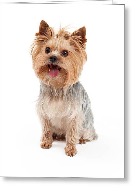 Toy Animals Greeting Cards - Cute Yorkshire Terrier Dog Sitting Greeting Card by Susan  Schmitz