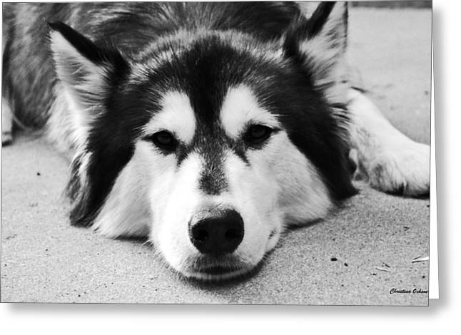 Husky Greeting Cards - Cuteness  Greeting Card by Christina Ochsner