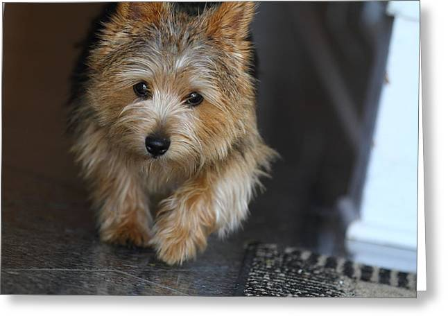 Furry Greeting Cards - Cutest Dog Ever - Animal - 011322 Greeting Card by DC Photographer