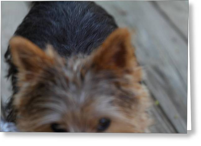 Pet Photographs Greeting Cards - Cutest Dog Ever - Animal - 01133 Greeting Card by DC Photographer