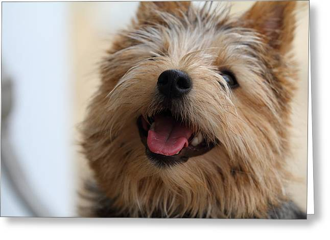 Furry Greeting Cards - Cutest Dog Ever - Animal - 011337 Greeting Card by DC Photographer