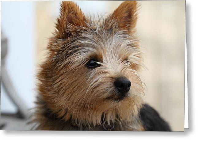 Cuddly Greeting Cards - Cutest Dog Ever - Animal - 011338 Greeting Card by DC Photographer