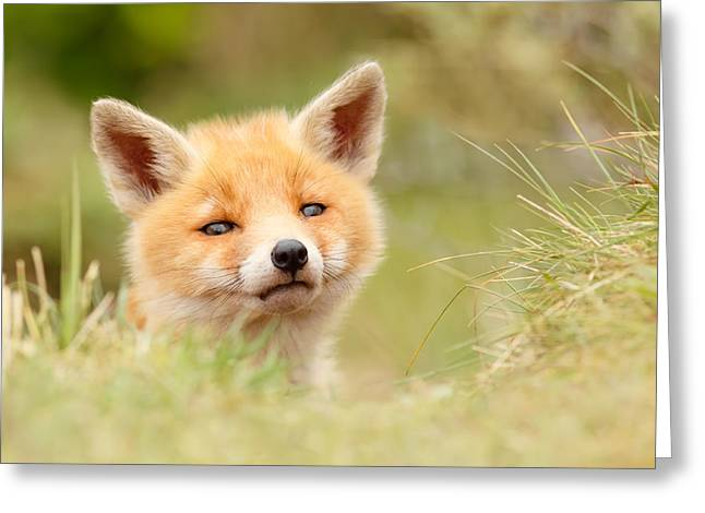 Suckling Greeting Cards - Cutie Face _Red Fox Kit Greeting Card by Roeselien Raimond