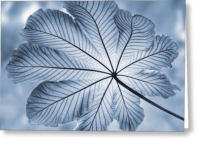 West Indies Greeting Cards - Cyanotype Rain forest leaf Greeting Card by John Edwards