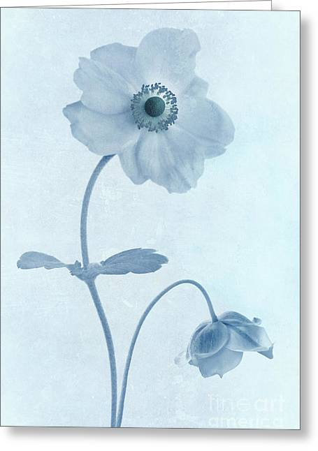 Close Focus Floral Greeting Cards - Cyanotype Windflowers Greeting Card by John Edwards